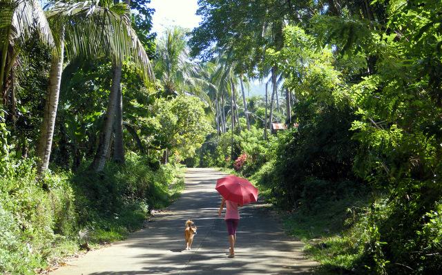 Zu den Wasserfällen gelangt man über steile Straßen, die ins Inselinnere führen.