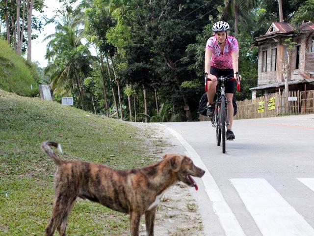 Auch viele Hunde gibt es. Die sind jedoch nicht, wie in den meisten anderen Länderen, des Radfahrers größter Feind, sondern schauen einen allesamt nur treudoof an und bleiben lieb am Straßenrand stehen.