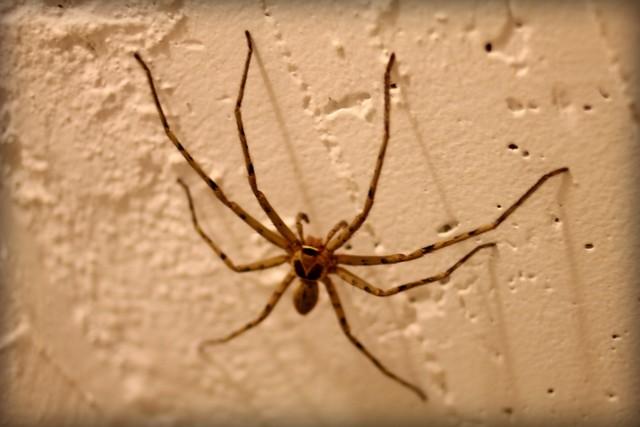 Große Spinne im Bad