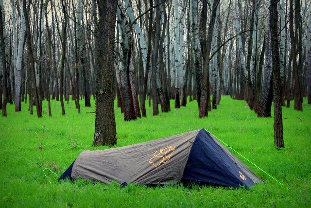Wildzelten im Birkenwald