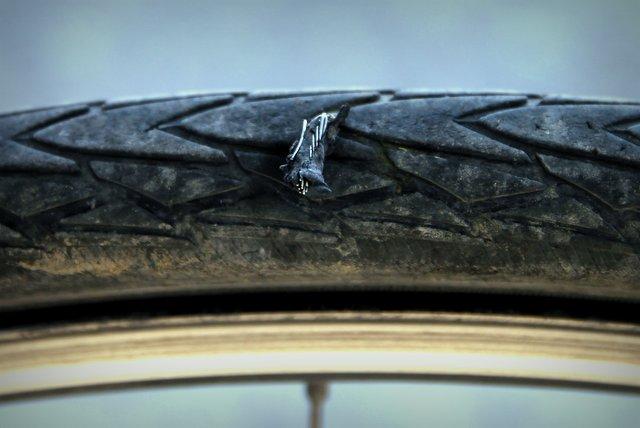 Das Loch in diesem Schlauch zu finden war nicht sonderlich schwer. Reste von einem alten LKW-Reifen steckten noch tief in meinem Mantel.