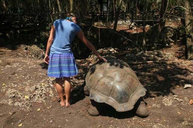 Riesenschildkröten auf Prison Island. Dieses Exemplar ist 192 Jahre alt.