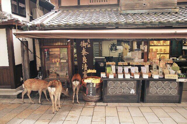 Hirsche wollen auch einkaufen.